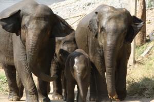 Aus den geretteten Tieren haben sich kleine Familien gebildet